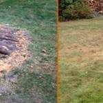 Enlever une souche d'arbre à Charlesbourg - Arboritek M.A. Inc à Québec