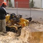 Enlèvement de souche d'arbre ville de Québec - Arboritek M.A. Inc à Québec
