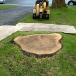 Essouchement et abattage d'arbre ville deSte-Foy - Arboritek M.A. Inc à Québec