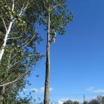 Émondage d'arbre et branches à Charlesbourg (Émondage à Québec) - Arboritek M.A. Inc à Québec