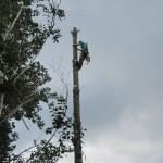 Émondage d'arbre à Lévis - Arboritek M.A. Inc à Québec